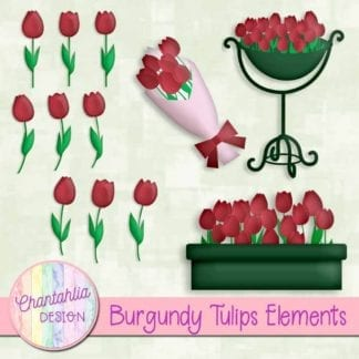 burgundy tulips elements