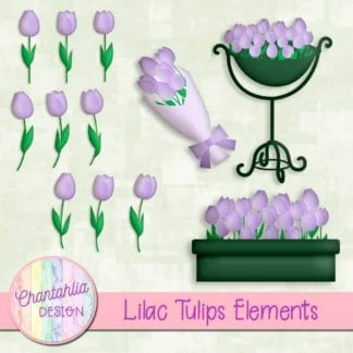 lilac tulips elements