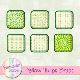 yellow tulips brads