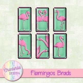 flamingos brads