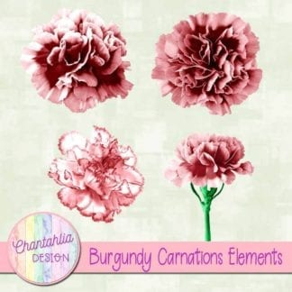 burgundy carnations elements