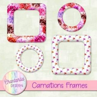 carnations frames