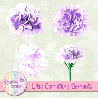 lilac carnations elements