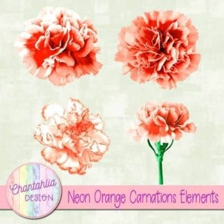 orange carnations elements
