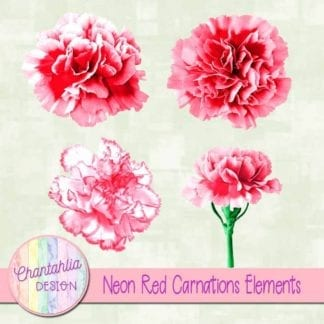 red carnations elements