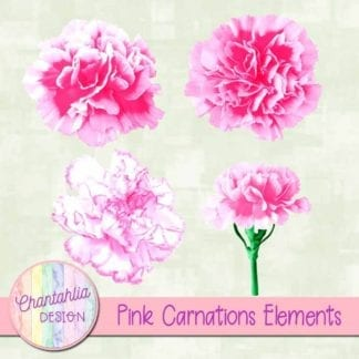 pink carnations elements