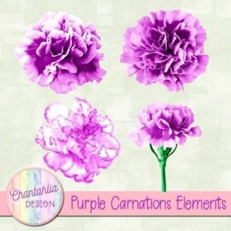 purple carnations elements