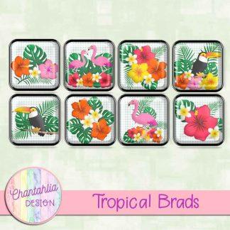 Free digital brads in a Tropical theme